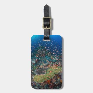 Fish Swimming over Reef Luggage Tag