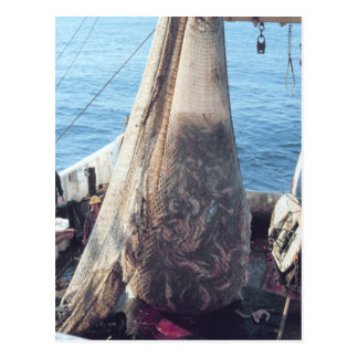 Fish Trawling Net Post Cards