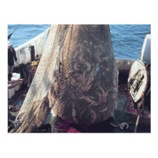 Fish Trawling Net Post Cards