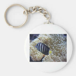 fish with anemone key chain