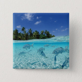 Fishes in the sea 15 cm square badge
