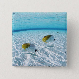 Fishes in the sea 2 15 cm square badge