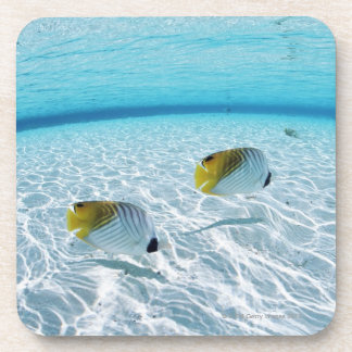 Fishes in the sea 2 coaster