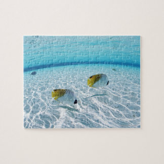 Fishes in the sea 2 jigsaw puzzle