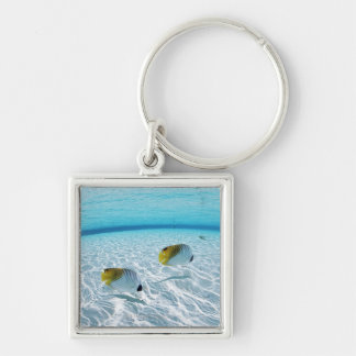 Fishes in the sea 2 key ring