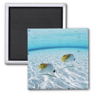 Fishes in the sea 2 magnet
