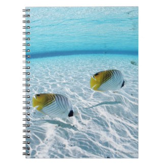 Fishes in the sea 2 notebooks