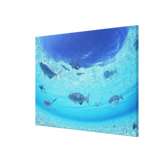 Fishes in the sea 3 canvas print