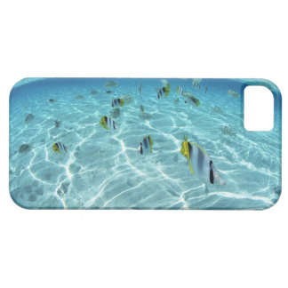 Fishes in the sea 3 iPhone 5 cover