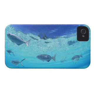 Fishes in the sea 4 Case-Mate iPhone 4 case