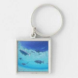 Fishes in the sea 4 key ring