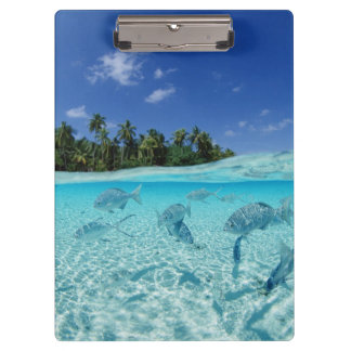 Fishes in the sea clipboard