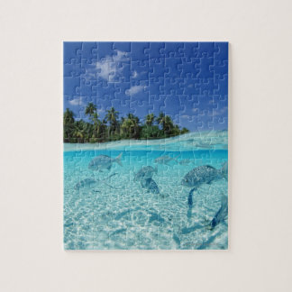 Fishes in the sea jigsaw puzzle