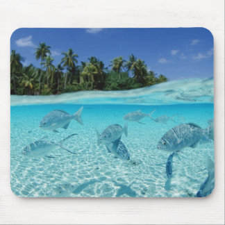 Fishes in the sea mouse mat