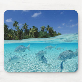 Fishes in the sea mouse pad
