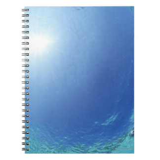 Fishes in the sea notebook