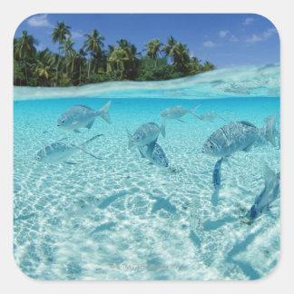 Fishes in the sea square sticker