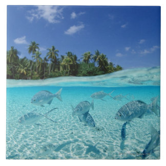 Fishes in the sea tile