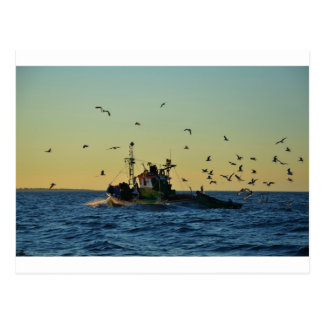 Fishing Boat Mobbed By Gulls Postcard