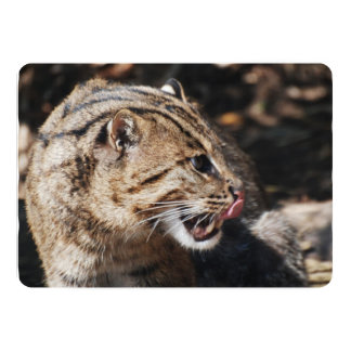 Fishing Cat Licking His Chops 13 Cm X 18 Cm Invitation Card