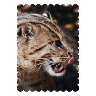 Fishing Cat Licking His Chops Custom Announcements