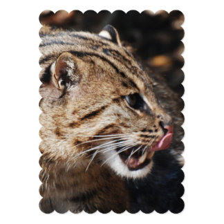 "Fishing Cat Licking His Chops 5"" X 7"" Invitation Card"