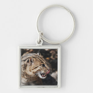 Fishing Cat Licking His Chops Keychain