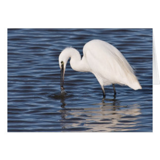 Fishing Egret Card