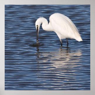 Fishing Egret Print