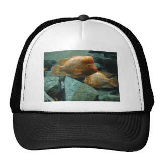 Fishy Face Only Momma Fish Would Love Trucker Hats