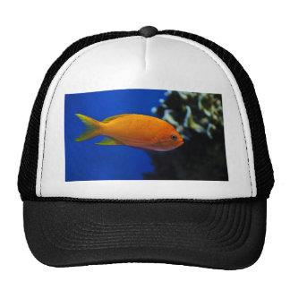 Fishy Fish Mesh Hats