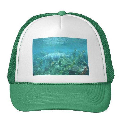 Fishy fishy... hat