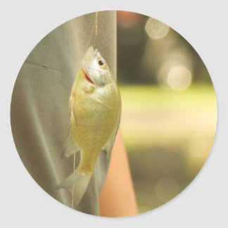 Fishyy Classic Round Sticker