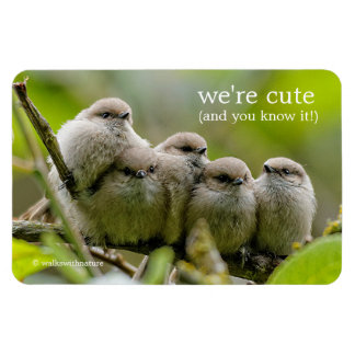 Five Bushtits Huddling in the Cold and Rain Rectangular Photo Magnet