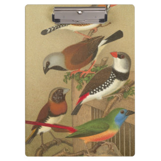 Five Colorful Pet Birds Perched on a Branch Clipboard
