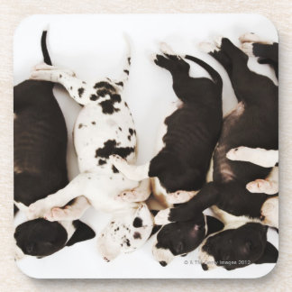 Five Harlequin Great Dane puppies sleeping Drink Coaster