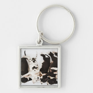 Five Harlequin Great Dane puppies sleeping in Silver-Colored Square Key Ring