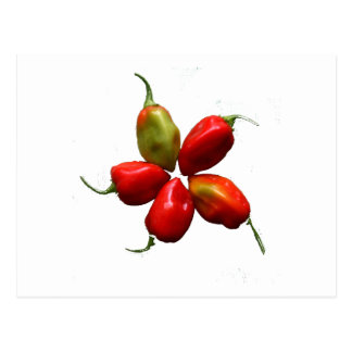 Five Hot Habanero Peppers Photograph Postcard