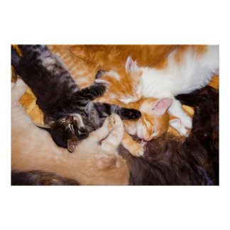 Five Kittens Sleeping with their Mother Cat Poster