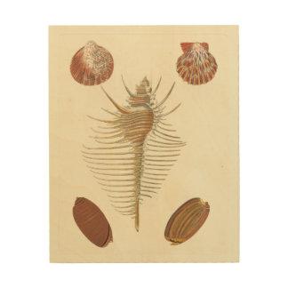 Five of a Kind Seashells Wood Print