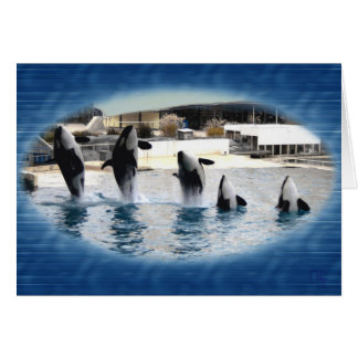 Five Orcas at Marineland france Greeting Cards