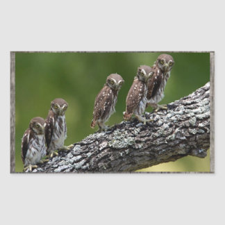 Five Owls on a sticker