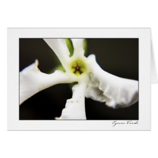 Five Petal White Flower Greeting Card