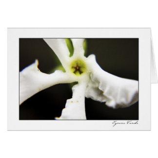 Five Petal White Flower Greeting Card