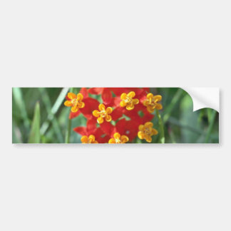 Five-petaled Yellow Cupped Flowers flowers Bumper Stickers