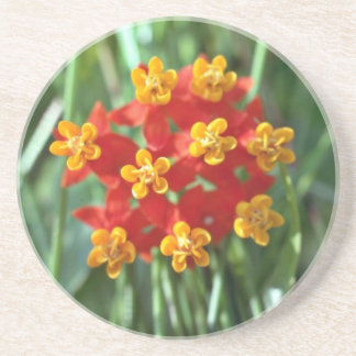 Five-petaled Yellow Cupped Flowers flowers Beverage Coaster