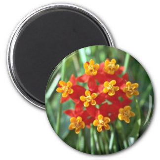 Five-petaled Yellow Cupped Flowers flowers Refrigerator Magnets