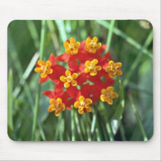 Five-petaled Yellow Cupped Flowers flowers Mouse Pads