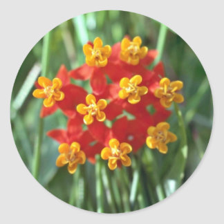 Five-petaled Yellow Cupped Flowers flowers Round Stickers