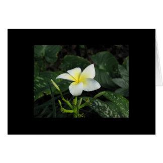 Five Petals Flower Note Card